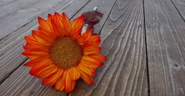 thanksgiving sunflower poems about thanksgiving