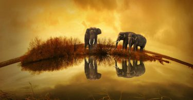 stories about environment for kids elephants