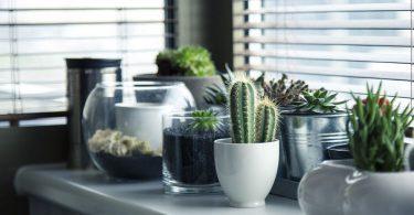 on the shelf succulents
