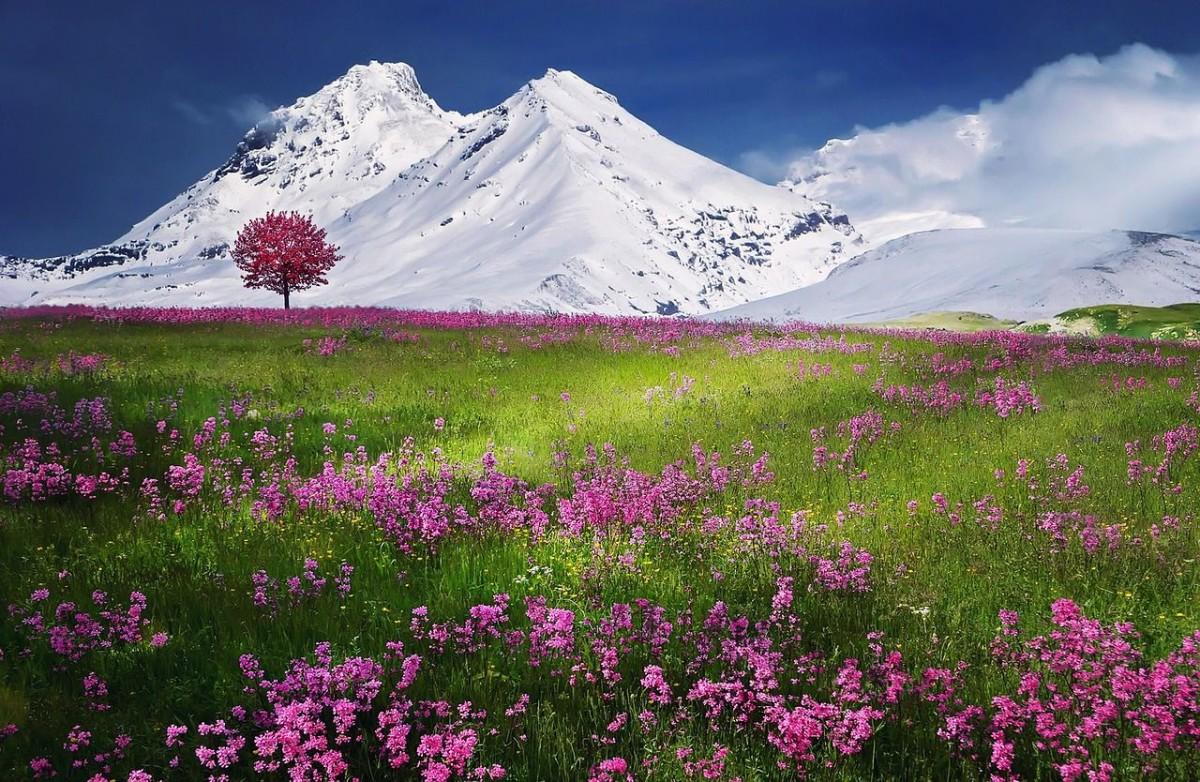 beautiful scenery flowers