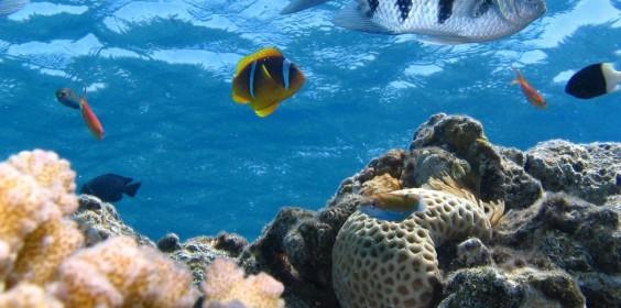 undersea fish