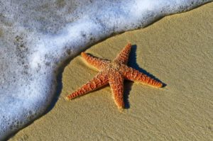 starfish on the beach sea