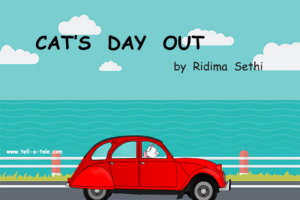 cat driving on beach road red car