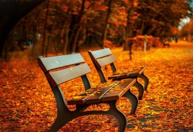 Bench in the park with maple leaves